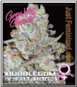 Growers Choice Bubblegum x Fat Hog is a potent Indica Cannabis Strain